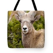 Smile For The Camera Tote Bag