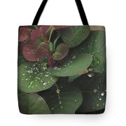 Smoke Tree Drops Tote Bag