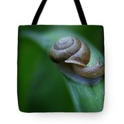 Snail In The Morning Tote Bag