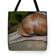Snail On A Log Tote Bag