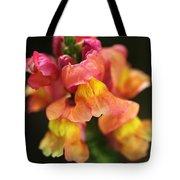 Snapdragon Flowers Tote Bag