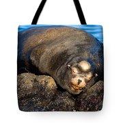 Snoozing Tote Bag