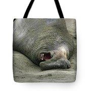 Snoring Elephant Seal Tote Bag
