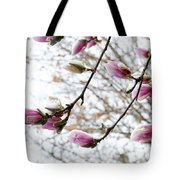 Snow Capped Magnolia Tree Blossoms 2 Tote Bag