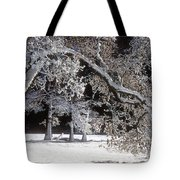 Snow Covered Black Oak Yosemite National Park Tote Bag