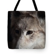 Snow Coyote Tote Bag