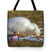 Snow Goose Feeding In A Field Tote Bag