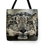 Snow Leopard Upclose Tote Bag
