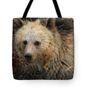 Snow The Grizzly Tote Bag