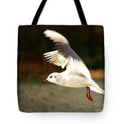 Snow White Seagull Tote Bag