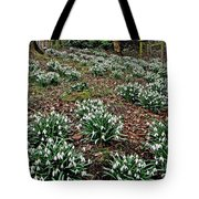Snowdrops In Spring Woodland Tote Bag