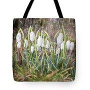 Snowdrops In The Garden Of Spring Rain 1 Tote Bag