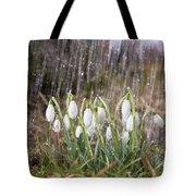 Snowdrops In The Garden Of Spring Rain 3 Tote Bag
