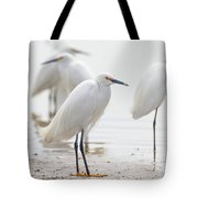 Snowy Egret And Friends Tote Bag