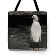 Snowy Egret Looking For Next Meal Tote Bag