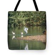 Snowy Egret Stretch 4280-080917-1 Tote Bag