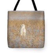 Snowy Owl 2016-4 Tote Bag