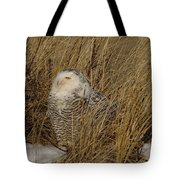 Snowy Owl In Grass Tote Bag