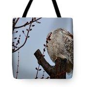 Snowy Owl Preening Tote Bag