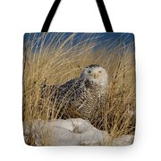 Snowy Owls On The Beach Tote Bag