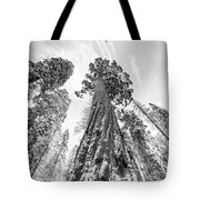 Snowy Sequoias At Calaveras Big Tree State Park Black And White 6 Tote Bag