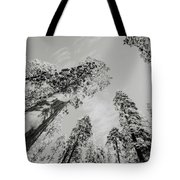 Snowy Sequoias At Calaveras Big Tree State Park Black And White 7 Tote Bag