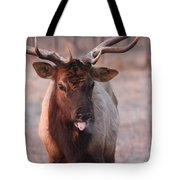 So There Tote Bag