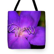 Soft Clementis Tote Bag