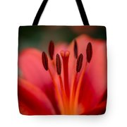 Soft Intimate View Tote Bag