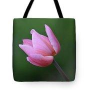 Soft Pink Tulip Tote Bag