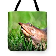 Soft Shell Turtle  Tote Bag