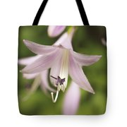 Softened Hosta Bloom Nature Photograph  Tote Bag