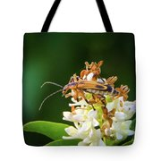 Soldier Beetle Tote Bag