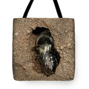 Solitary Bee  Andrena Cinearia Tote Bag