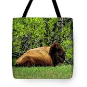 Solitary Buffalo Tote Bag