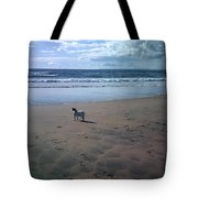 Solitary Doglooking To America Tote Bag