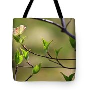 Solitary Dogwood Bloom Tote Bag