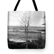 Solo Young Tree Tote Bag