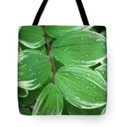 Solomon's Dew Tote Bag