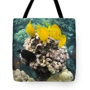 Something To Nibble On Tote Bag