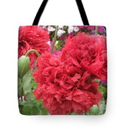 Somniferum Poppy 1 Tote Bag