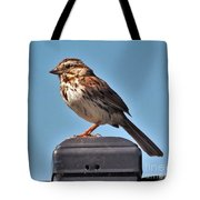 Song Sparrow Profile         Summer      Indiana Tote Bag
