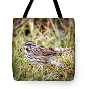Song Sparrow Sweetie Tote Bag