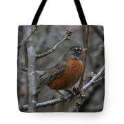 Songbird Evening Tote Bag