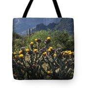 Sonoran Desert Cholla  Tote Bag