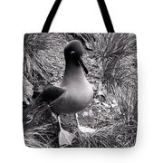 Sooty Albatross On A South Georgia Cliffside Tote Bag