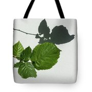 Sophisticated Shadows - Glossy Hazelnut Leaves On White Stucco - Horizontal View Left Down Tote Bag