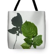 Sophisticated Shadows - Glossy Hazelnut Leaves On White Stucco - Vertical View Upwards Left Tote Bag