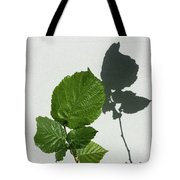 Sophisticated Shadows - Glossy Hazelnut Leaves On White Stucco - Vertical View Upwards Right Tote Bag