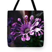 South African Daisy Tote Bag